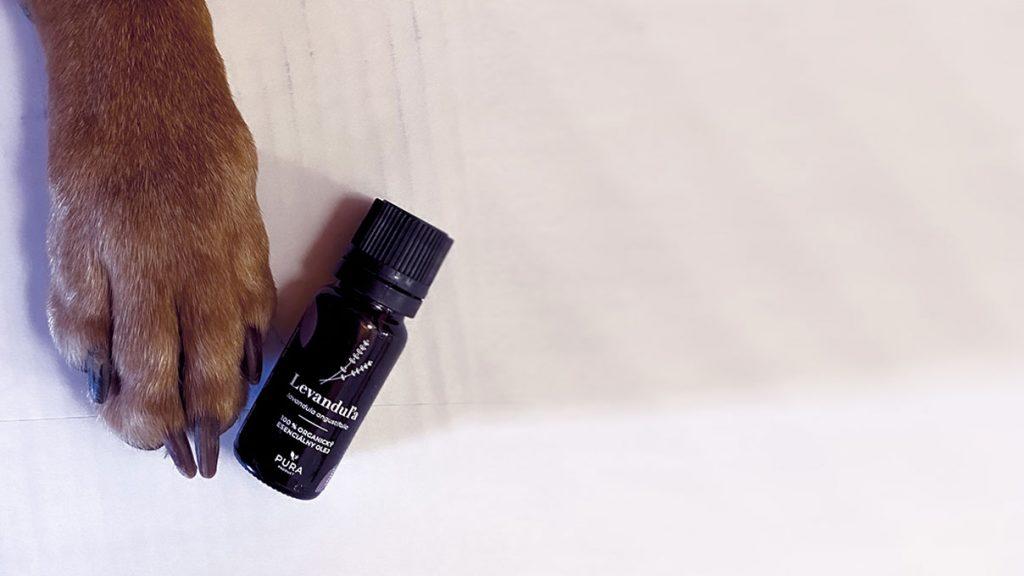aromaterapia-a-zvierata-psici