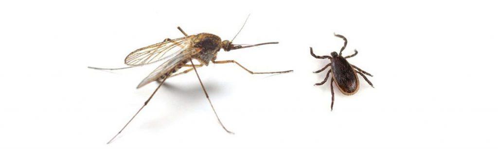 komar-klieste-repelent-esencialne-oleje